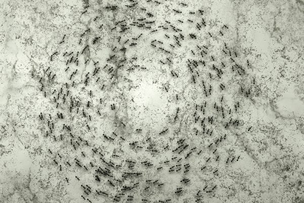 Jeremy-Blincoe-antstill